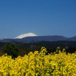 浅間山が再冠雪・・・