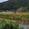 (続)久し振りの大美川:コウノトリJ0067の観察と滞在記録更新
