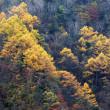 秋深まる季節(Ⅲ)