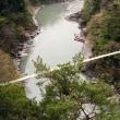 1997桜出会い旅(天竜川)