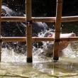 ハシビロコウの水浴び@ハトゥーウェ