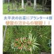 第八代浜崎太平次翁のお墓にプランターが置かれていた!!!