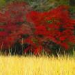 11月11日 実りの秋紅葉