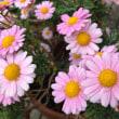 街で出会った花たち   2018-4回目