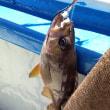 ベイエリアでサーモン釣り