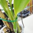 2月16日(金)2月の洋ラン教室・しびれた羽生結弦選手のフィギュア