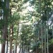藁科街道ちょっと歩き→洞慶院