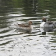 荒川自然公園の水鳥たち