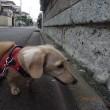 花ちゃん私達とフルコースを歩いた・・・・・