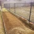 春野菜の植え付け準備