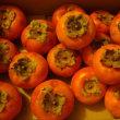 富有柿:当たり年