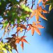 天拝山歴史自然公園 紅葉