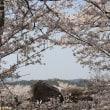 ぶらり旅・石舞台古墳(奈良県高市郡明日香村)