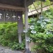 静岡・東京・伊豆の旅その3「野の花亭こむらさき」