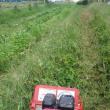 枝豆,小豆,蕎麦畑の除草、そして雑草ごと藍と和綿を整理