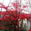 箱根に紅葉を見て自然薯を食べに行って来ました