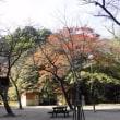 病院帰りに屋外で商品レビュー撮り・・・桜公園