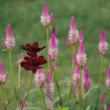 里山ガーデン3~秋の花々