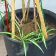 室内植物に追肥