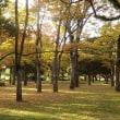 広島の被爆樹木
