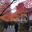 嵯峨野の紅葉