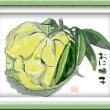 水彩画 鬼柚子