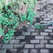 9・18・台風18号、我が家の被害  (´༎ຶོρ༎ຶོ`)