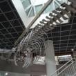 東北大学理学部 自然史標本館