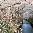 【4/4】桜の御朱印巡り&桜回廊散策バスツアー ~らかん茶屋でのご昼食付~
