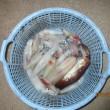 今年最初で最後のアカイカ釣り
