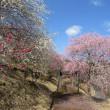 久米の梅の里に行ってきました