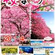 第40回もとぶ八重岳桜まつり!