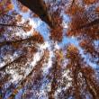 秋の水元公園(その2)