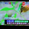 9/22 消えた栗 害虫退治の方法