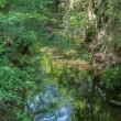 私の好きな玉川上水緑道