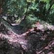 54 西教寺裏から未踏の三石岳東稜を登る 2018.06.16