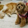 7月31日(月)…Dogナーサリー(犬の保育園)
