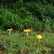 庭を見てから、きのこ行脚  キタマゴの復習から     2018.09.15.(1)
