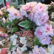 桜リースのレッスン✿春はもうすぐ