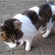 地域猫の長老さん