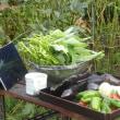 夏野菜、まだまだ採れます!