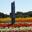 鼻高展望花の丘のコスモスとそばの花