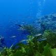 12月後半のロットネスト島ダイビング