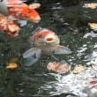 No.2861  明神の池で水くみ