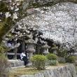うすぐもり桜の精の中に入り