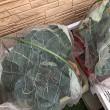 迷惑かけた秋冬野菜たちの現況。