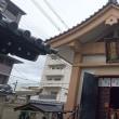 177 アチャコの京都日誌 再びの京都  感動の最終33番 多くの子供を作る原動力は?
