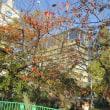 「森友疑惑追及」のぼり6駅アピールラン /足立議員の弁明は「万辞」に値する