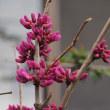 春のCheebee Garden3.19