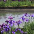 北山菖蒲園